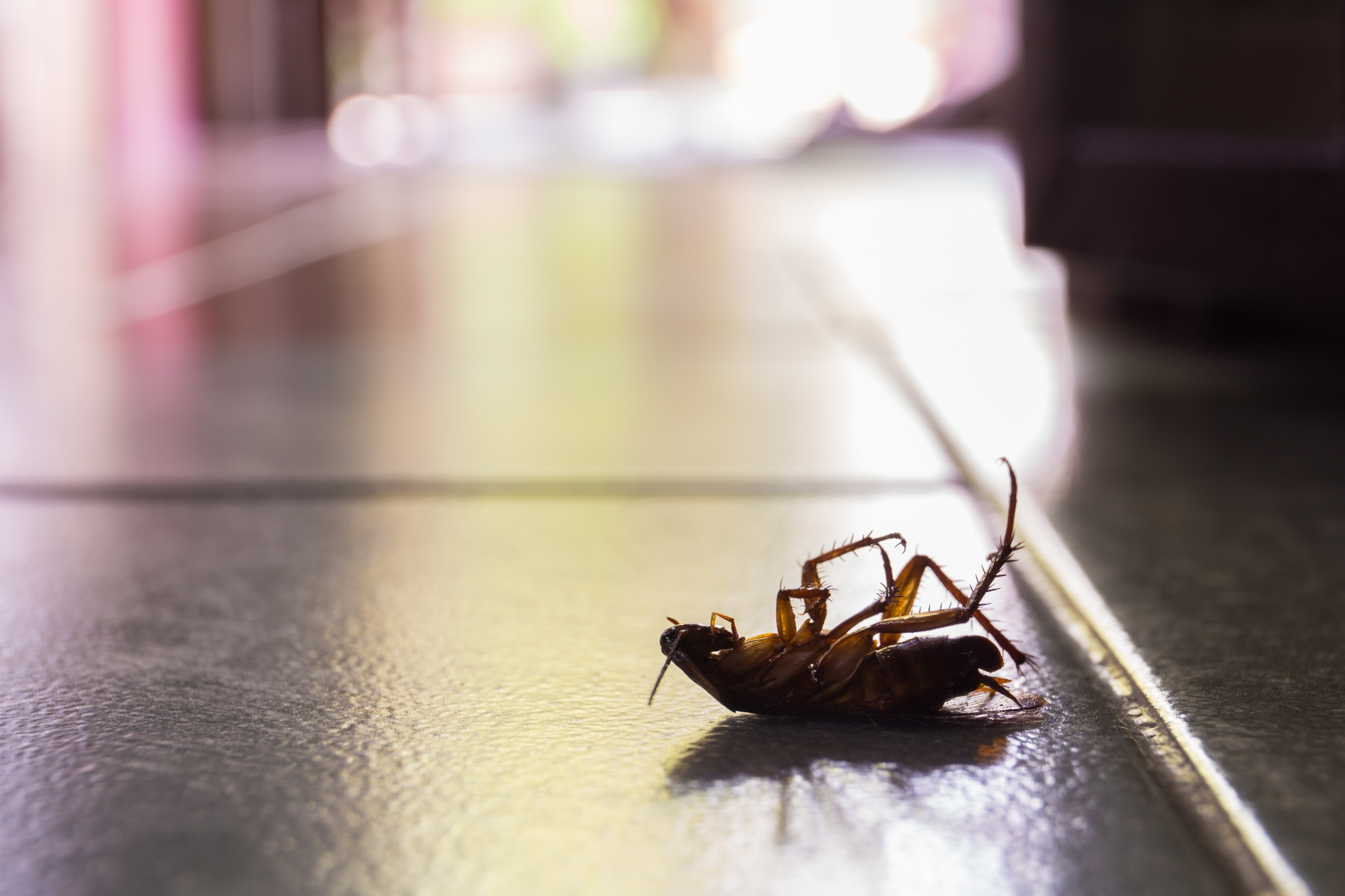 Cockroach Control, Pest Control in Erith Marshes, DA18. Call Now 020 8166 9746