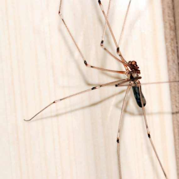 Spiders, Pest Control in Erith Marshes, DA18. Call Now! 020 8166 9746
